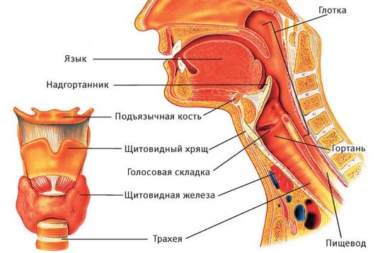 Рак горла лечение в россии